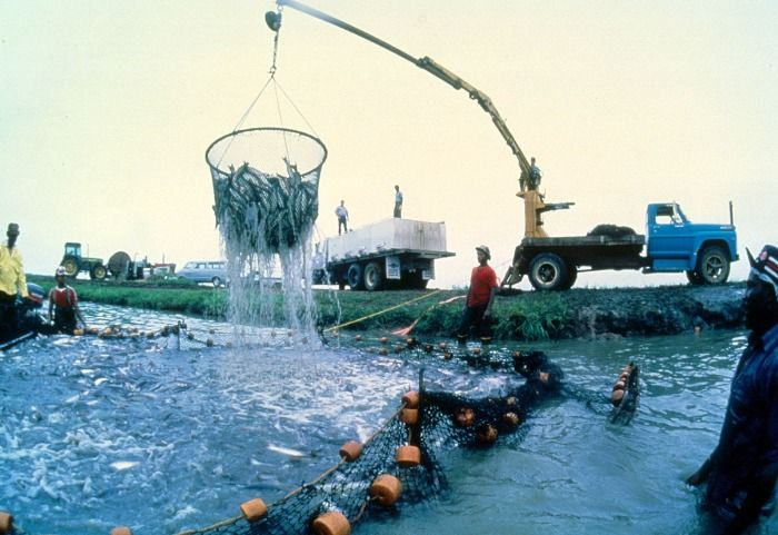 Name the country with most aquaculture